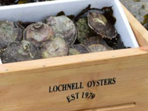 Lochnell Oysters